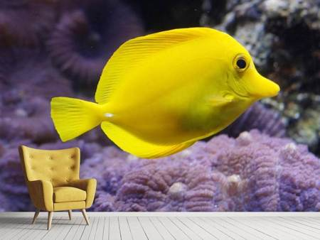Photo Wallpaper The lemon-doctor fish