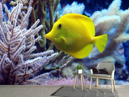 Photo Wallpaper Yellow doctor fish XL
