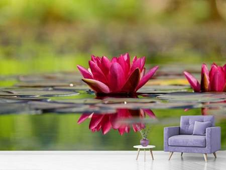Photo Wallpaper Red water lily duo