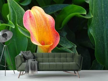 Photo Wallpaper Wild Calla