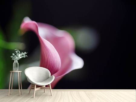 Photo Wallpaper Calla in purple