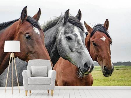 Photo Wallpaper The horse trio