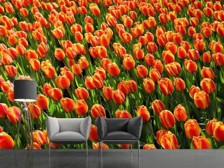 Photo Wallpaper Tulip field in orange