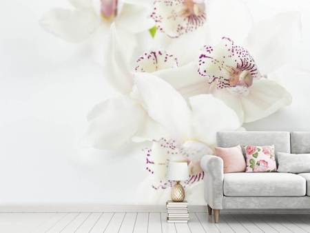 Photo Wallpaper Fantastic orchids