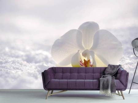 Photo Wallpaper The orchids bloom