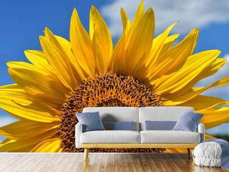 Photo Wallpaper Sunflower in XXL