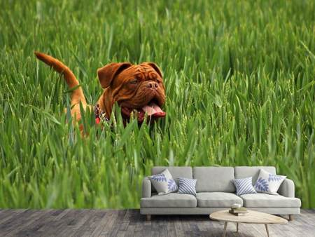 Photo Wallpaper The mastiff in the grass