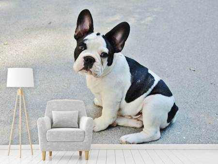 Photo Wallpaper Sweet French Bulldog