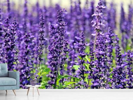 Photo Wallpaper XL lavender