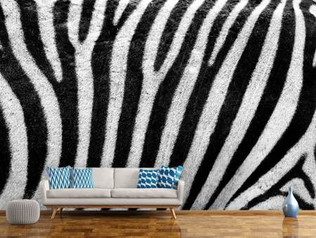 Photo Wallpaper Strip of the zebra