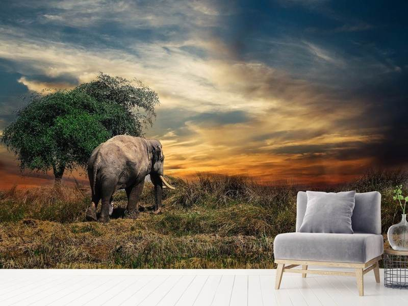 Photo Wallpaper The elephant in the sunset