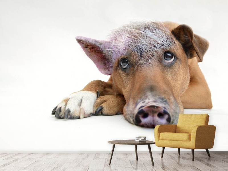 Photo Wallpaper The Funny Pig Dog Shop Now
