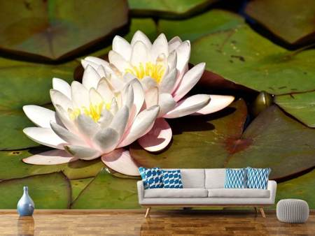 Photo Wallpaper Water lily duo in white