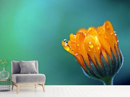 Photo Wallpaper Marigold in morning dew