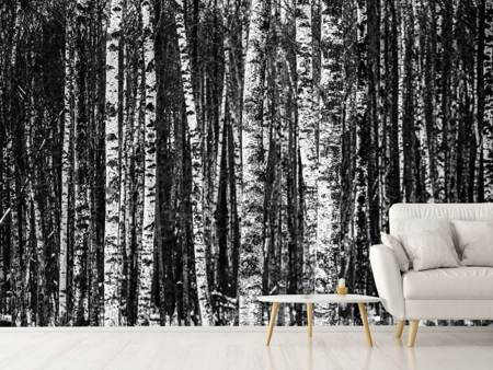 Photo Wallpaper Many birches XL