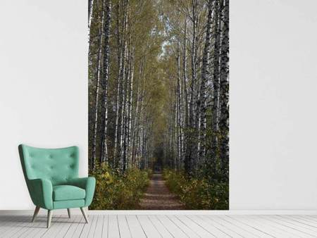 Photo Wallpaper Birch avenue
