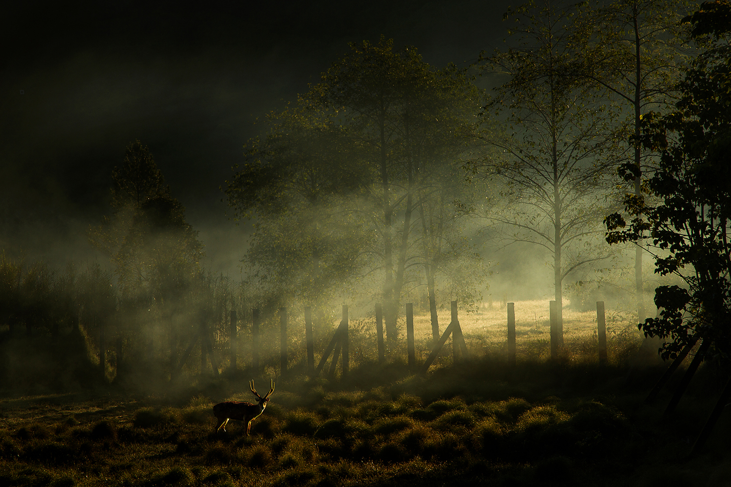 Photo Wallpaper Misty Morning II