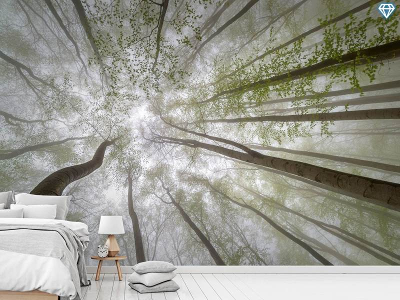 Photo Wallpaper Forest Views