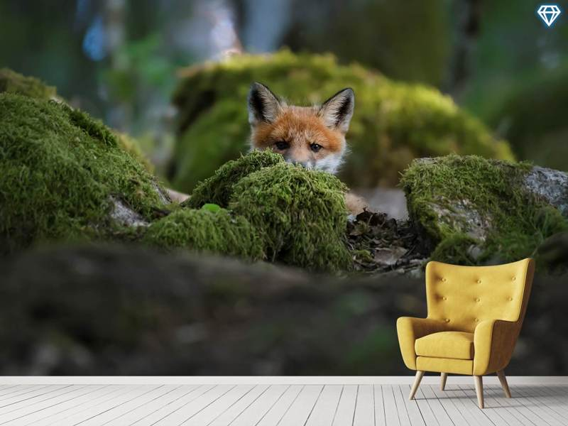 Photo Wallpaper Curious Fox