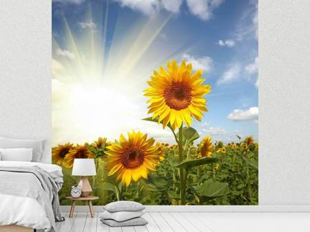 Photo Wallpaper Sunflower In Sunlight