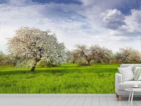 Photo Wallpaper Apple Tree Garden