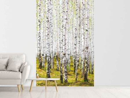 Photo Wallpaper The Birch Forest In The Spring