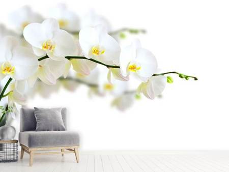 Fotomurale Orchidee bianche