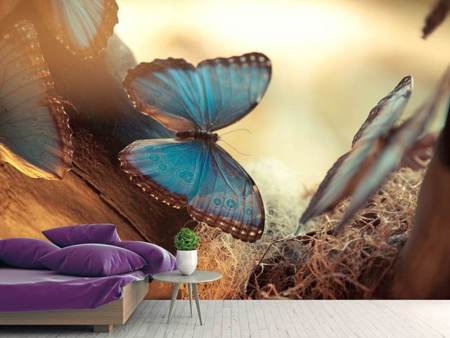 Photo Wallpaper Butterflies