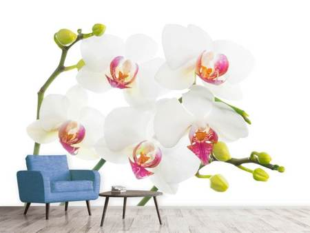 Fotomurale Amore per le orchidee