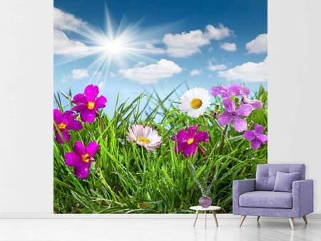 Photo Wallpaper Flowering Meadow