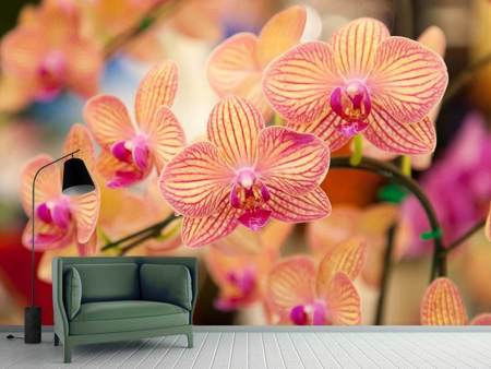 Fotomurale Orchidee esotiche