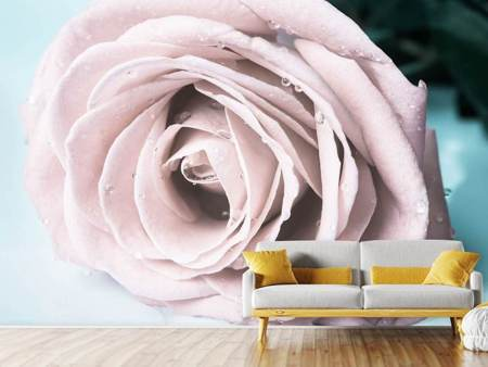 Papier peint photo Rose pastel