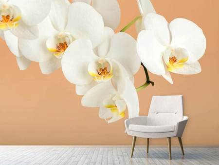 Photo Wallpaper White Orchid Flowers